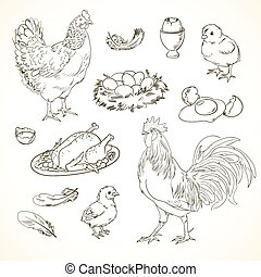 Freehand drawing chicken items on a sheet of exercise book....