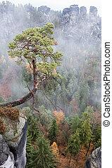 Tree in Saxon Switzerland, Germany