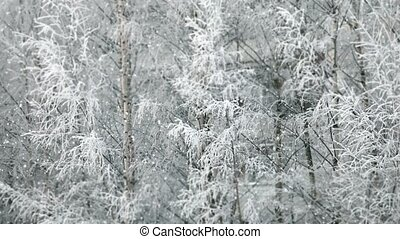 winter snowfall - snow covered tree background loop ready...