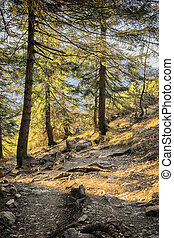 Path in Bavarian Alps - Path in forest on mountain Jochberg...