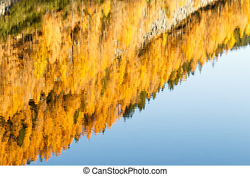 Pines reflected on lake