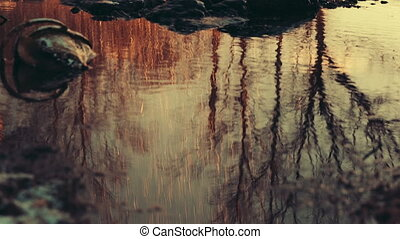 Reflection of trees in water. - Reflection of trees in water...