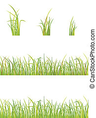 variation of grass  - vector illustration of green grass
