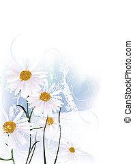 chamomile - vector illustration of a beautiful floral...