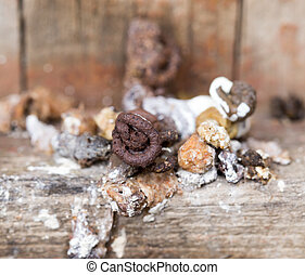 bird droppings Macro