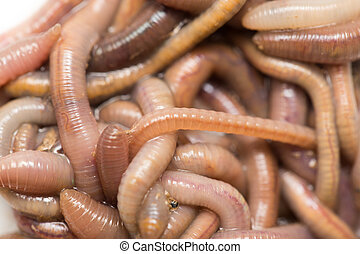 earthworms., macro,