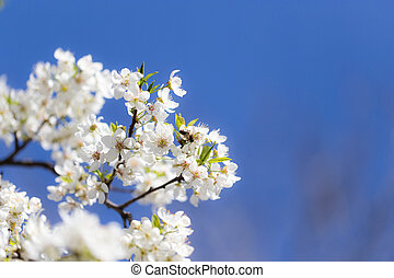 bee on flowers on a tree