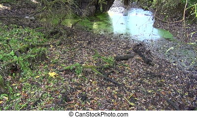 Little pond in forest in autumn - Little pond in swampy...