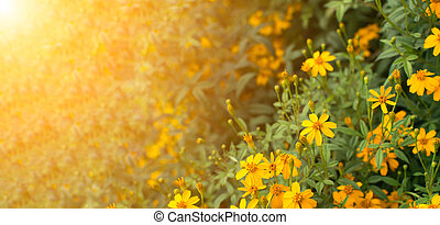 Yellow flowers under the sunlight