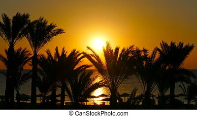 landscape with palms and sunrise over sea - beautiful beach...