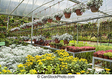 greenhouse - Many plant selling in greenhouse.