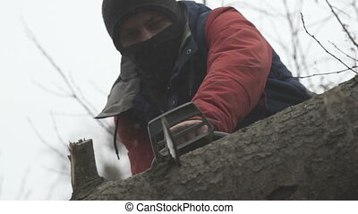 chainsaw blade cutting log of wood - red chainsaw blade...