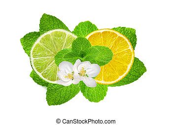 Lemon and lime slices on fresh mint isolated on white