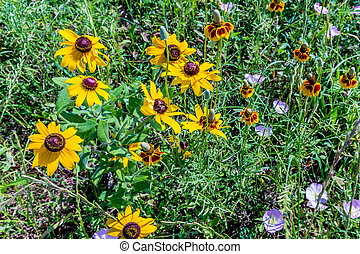Various Colorful Texas Wildflowers - Various Texas...