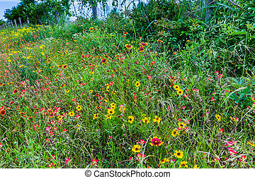 A Wide Variety of Yellow and Orange Texas Wildflowers - A...