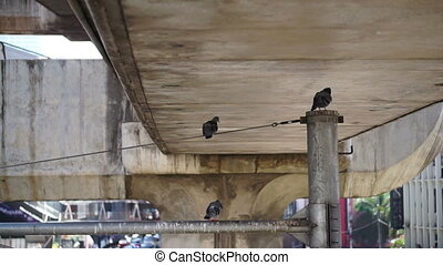 pigeon stay in the city concrete - pigeon stay on the top of...