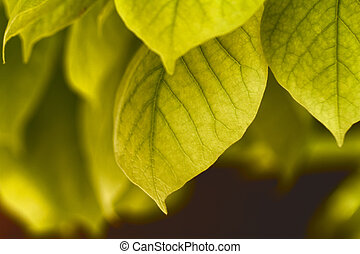 Green leaves - Photo of the green leaves in summer