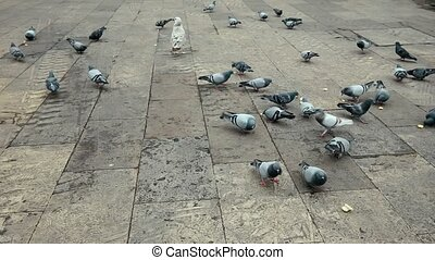 Seagulls And Pigeons Eat Bread Square Place Reial - Seagulls...