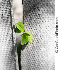 leaves of the plant in a concrete fence