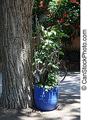 Vines and Cholla - Blue flower pot filled with cholla...