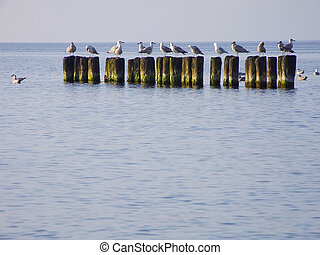 Sea. Breakwater and sea-gulls - Sea. Sea-gulls sit very...