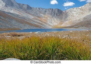 Grass and Lake on Mount Evans - Grasses in front of a...