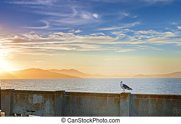 Beautiful Tranquil Seagull Sitting on Railing on...