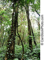 Tropical forest,Trees in Kew Mae Pan Nature Trail, Doi...