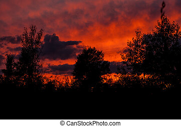 Black forest at a red beautiful sunset with clouds