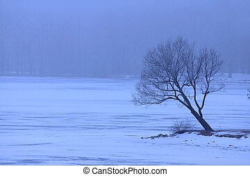 Single tree in winter weather by the frozen lake