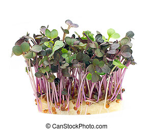 Sprouts - Cress sprouts