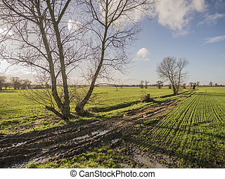 Muddy Track - A muddy track bathed in evening sun on a...