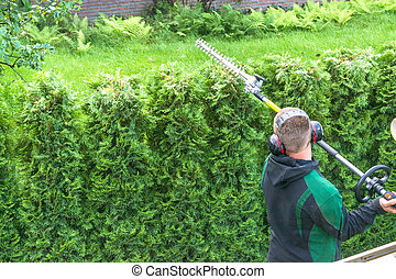 Professional hedges cutting - Professional hedges cutting...