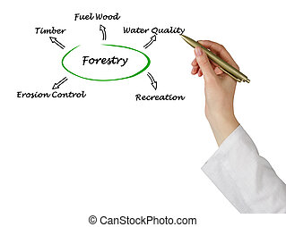 Diagram of Forestry