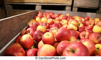 lot of red apples - red apples in large boxes