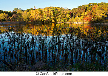 Marthaler Pond Autumn Reflections - trees and pond of...