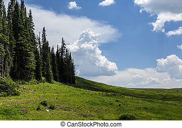 Huntington Canyon Summit - Beautiful mountain meadow at the...
