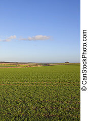 yorkshire wolds wheat fields - picturesque wheat fields in...