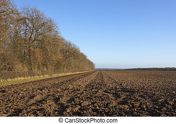 woodland and plow soil - winter landscape with deciduous...