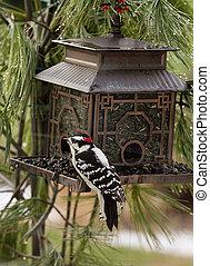 Woodpecker at Birdfeeder - Black white woodpecker feeding at...