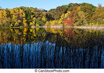 Marthaler Pond Autumn Morning - trees and pond of marthaler...