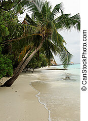 Beach with palms Maldives Indian ocean