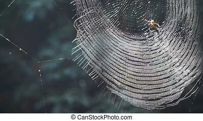 Spider on web in forest sunshine. Abstract trap and danger