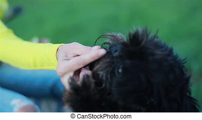 Small dog taking food from hand - Small cute shaggy dog...