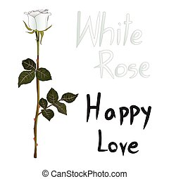 White Rose Meaning isolated on White Background Vector...