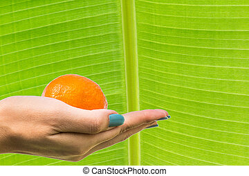 Beautiful female hands with the orange on fresh green Leaf...