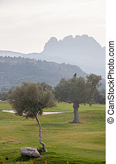 Olive trees and Pentadaktylos mountain range in the...