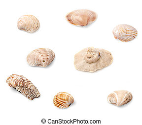 Eight seashells - Set of eight seashells isolated on white...