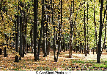 trees in autumn, september, daily time, park