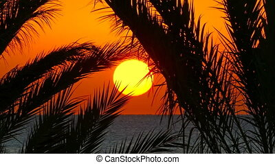 palms and sunrise over sea - beautiful landscape with palms...